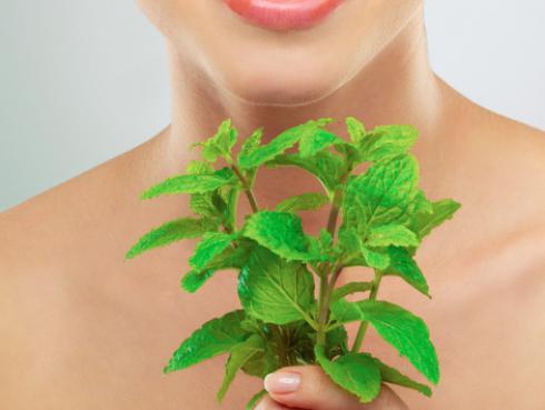 Descubre los beneficios de la hierbabuena para tu piel