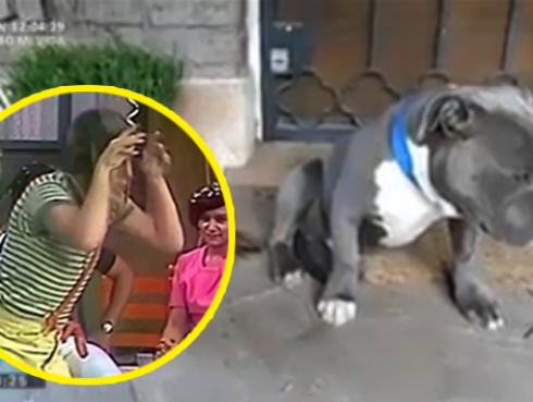 Facebook se rinde ante la ternura de este 'perro arrepentido' [VIDEO]