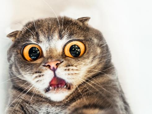 Mira cuál sería el mayor temor de los gatos
