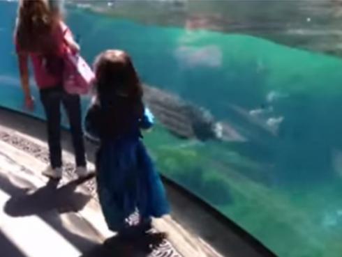 ¡Mira la reacción de esta foca cuando la niña con la que jugaba se cae!