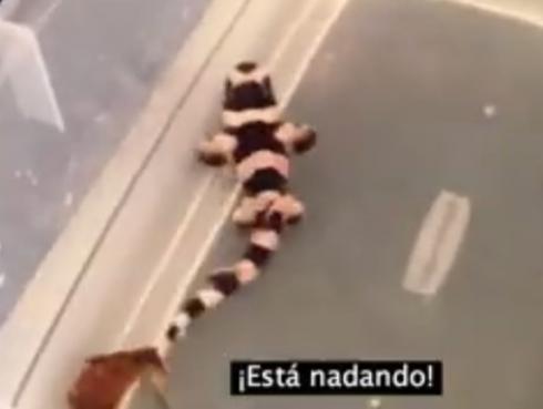 Nacimiento de tiburón bambú causa asombro en Youtube