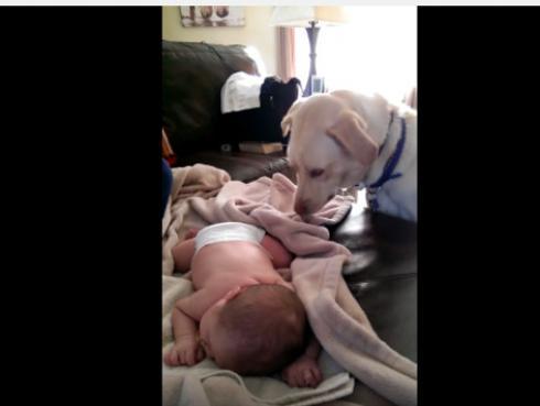 Perrito cubre al bebito de su ama y se convierte en viral