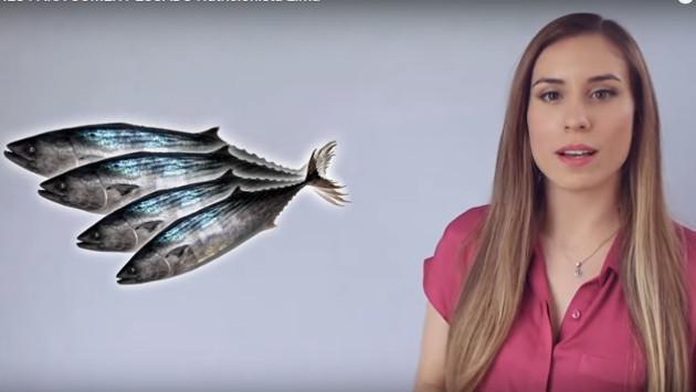 6 poderosas razones para consumir pescado