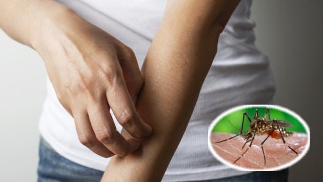 Cómo evitar contraer el dengue si viajas este feriado largo