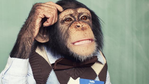 El complejo de mono