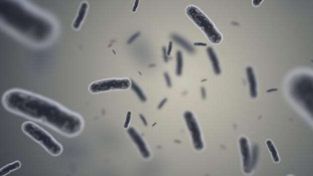 La enfermedad de Lyme y lo que debes saber