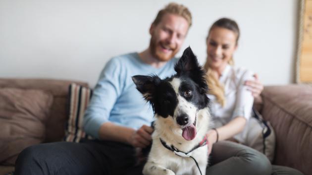 Mirar tiernas fotos de animales con tu pareja podría salvar tu relación