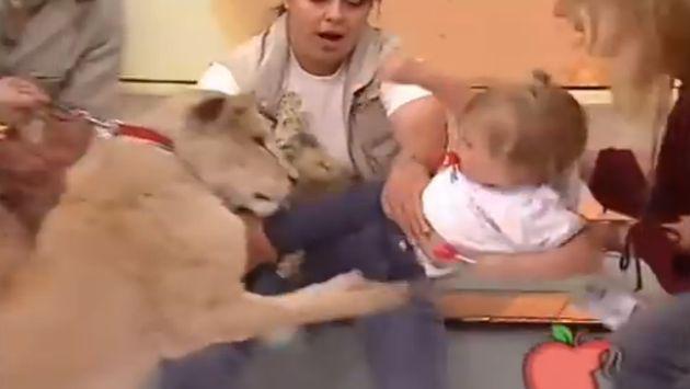 ¡Niña es atacada por leona!