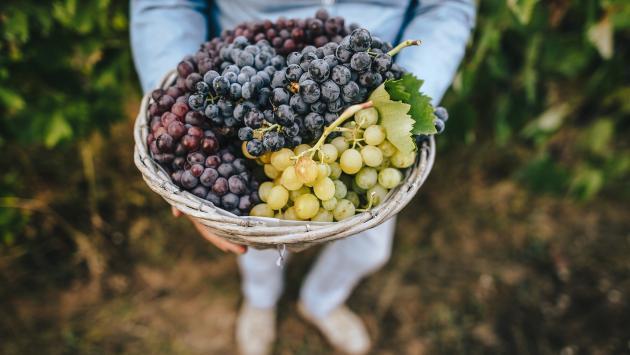 ¿Te gustan las uvas? Estos son sus beneficios