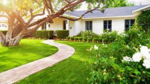 El inquilino del jardín - Parte 2