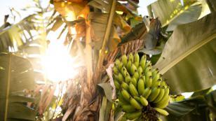¡Protégete del coronavirus con los alimentos de la selva!