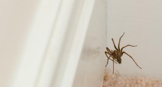 Repelente casero para ahuyentar arañas