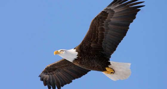 La maravillosa transformación del águila