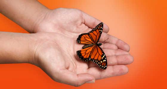La mariposa herida