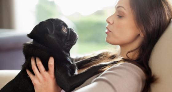 Tip para limpiar la suciedad de tu mascota