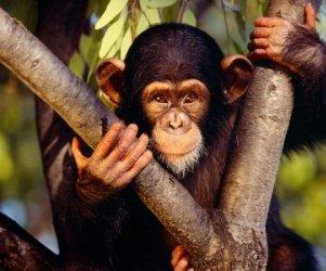 Los monos...